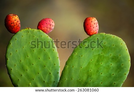 Cactus fruits - stock photo