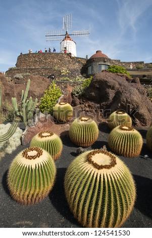 Cactus garden in Lanzarote, Canary Islands, Spain. - stock photo