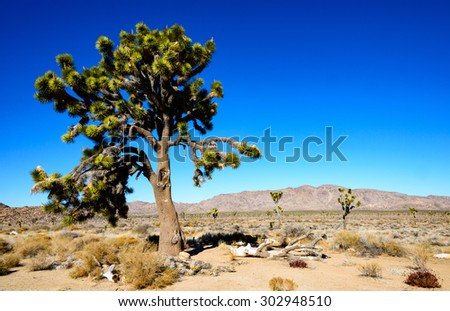 Cactus Garden, Joshua Tree National Park