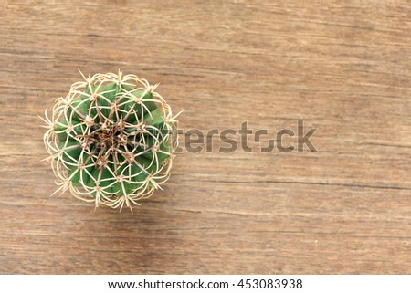 Cactus has a circular shape with curved spines and spikes placed on the left of the wooden floor. - stock photo