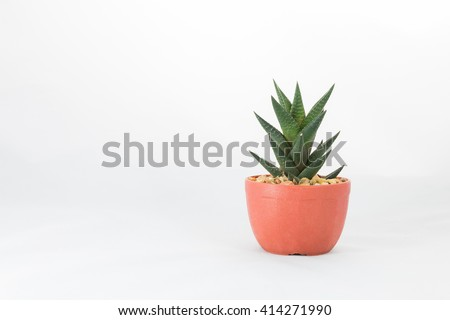 Cactus in a pots on white background. - stock photo