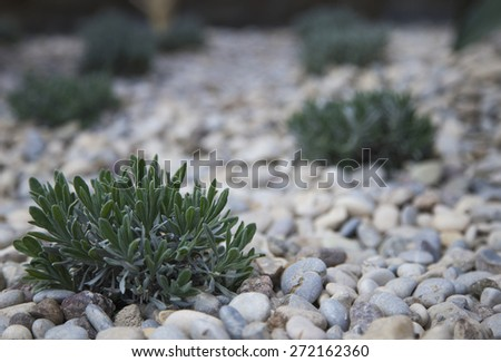 Cactus in botanic garden,shallow depth of field - stock photo
