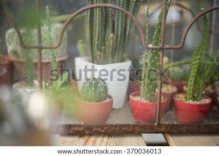 Cactus in coffee shop