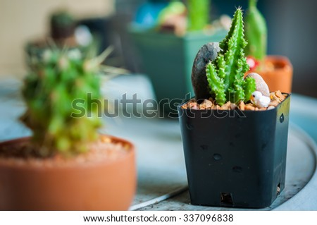 Cactus in flowerpot - stock photo