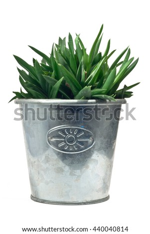 Cactus in metal pot on white background - stock photo