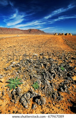 Cactus in Middle Atlas Mountains, Africa - stock photo