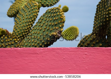 cactus in pink container