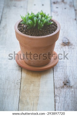 Cactus in pot for decorated over wooden background, vintage soft tone