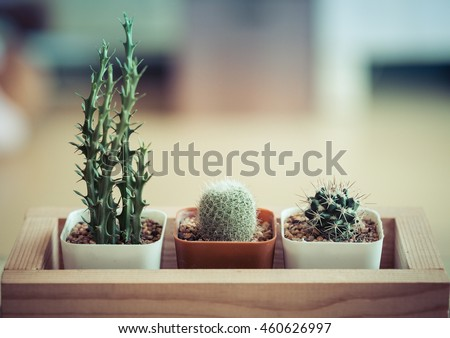 cactus in potted ,in the room