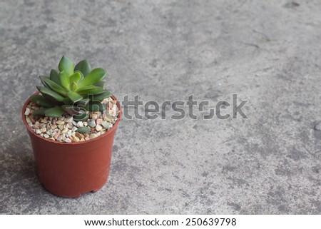 cactus in Queen Sirikit Botanic Garden - stock photo