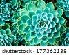 cactus in Queen Sirikit Botanic Garden,chiangmai Thailand - stock photo