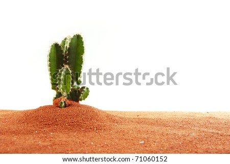 Cactus in sand with white background - stock photo