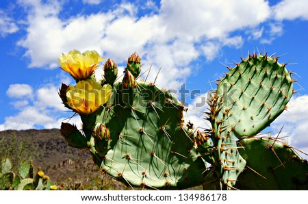 Cactus in spring time with flowers - stock photo