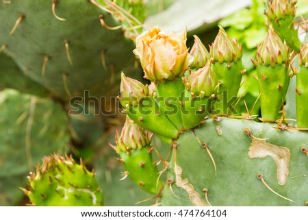 Cactus in the garden in summer
