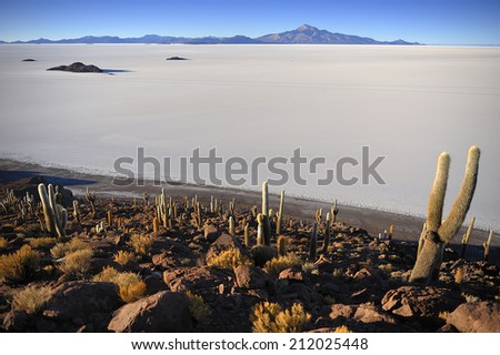 Cactus island in Uyuni Salt Flat,  Salar de Uyuni,  world's largest salt flat, Bolivia, - stock photo