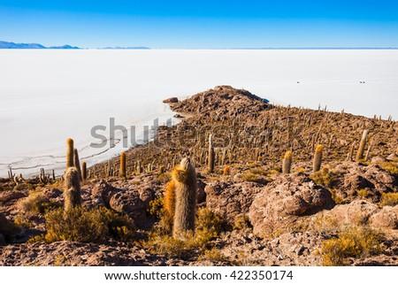 Cactus Island on Salar de Uyuni (Salt Lake) near Uyuni in Bolivia - stock photo