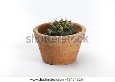 Cactus Isolate on white background