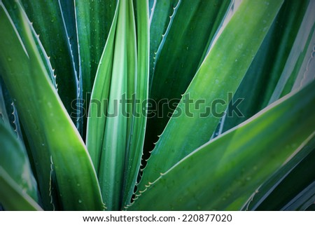 Cactus Leaf Pattern - stock photo