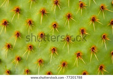 Cactus macro - stock photo