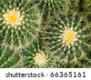Cactus Macros with Texture Suitable for Desert Backgrounds - stock photo