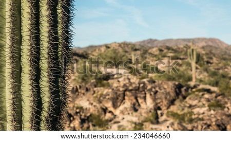 Cactus Needles Arizona. Closeup of the needles of a saguaro cactus with a desert landscape in the background. - stock photo