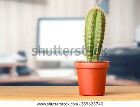 Cactus On The Office Desk