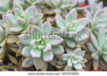 Cactus or succulents in a planter. - stock photo