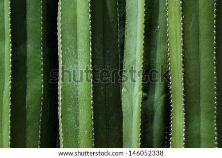 Cactus pattern - stock photo