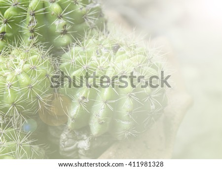 Cactus pattern background color filters.