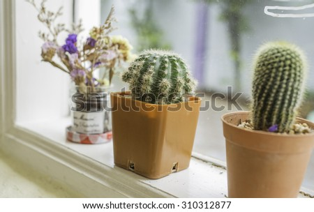 Cactus placed by the window
