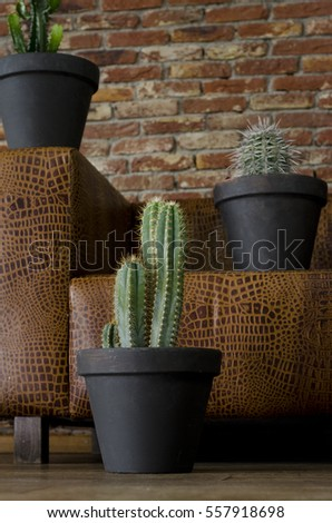 Cactus plant before a brown sofa in a interior