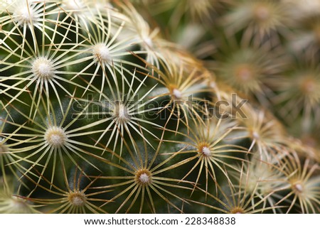 Cactus plant details - green macro background - stock photo