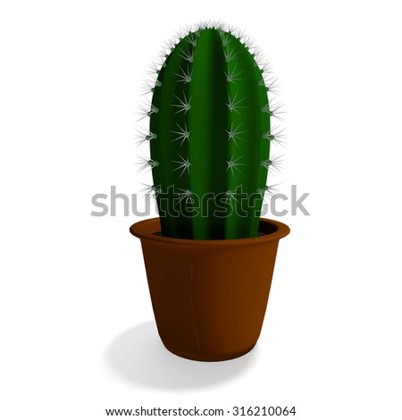 Cactus plant in isolated on white background - stock photo