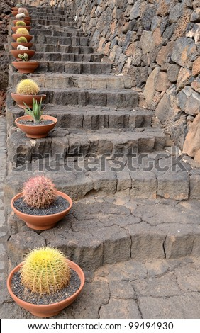 Cactus plants in pots on stone stairs - stock photo