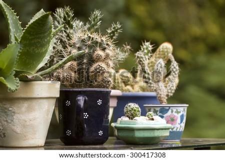 Cactus plants in various ceramic planters - stock photo