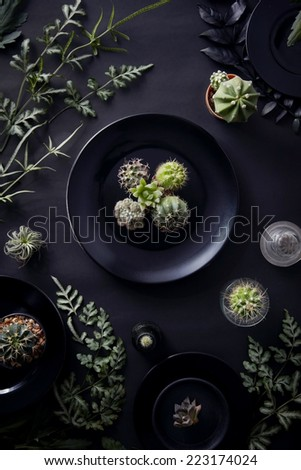 Cactus Succulent and Fern plants styling like dinner  - stock photo