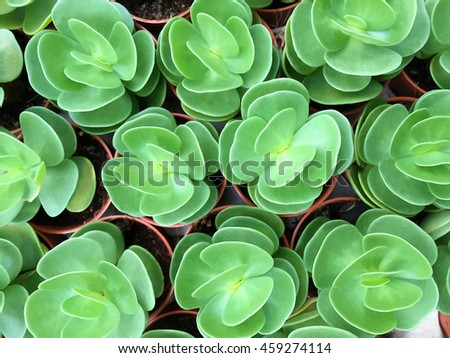 Cactus, Succulent Plant, Selective Focus - stock photo