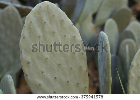 cactus tree - stock photo