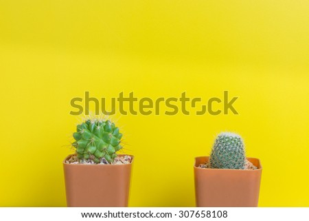 Cactus two pots on the yellow wall. - stock photo