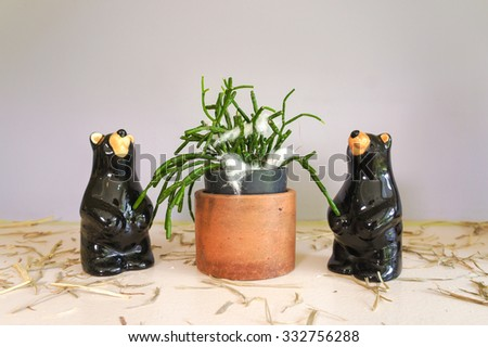 Cactus with Ceramic Black Bears, Hatiora is a house plant, commonly known as Easter cactus or Whitsun cactus. Selective Focus - stock photo