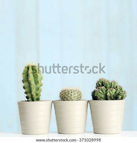 cactus with colorful background - stock photo