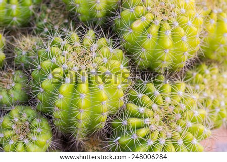 Cactus with plant in a pot on nature background.  - stock photo