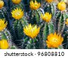 cactus with spikes - stock photo