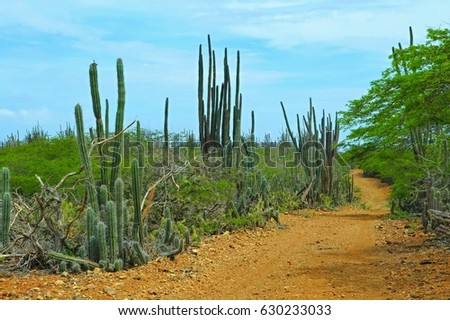Cactuses (cacti) and yellow sandy rock trail. Tropical dry forest national park scenery, adventure hiking, biking and off-road trip. Desert with cactuses.
