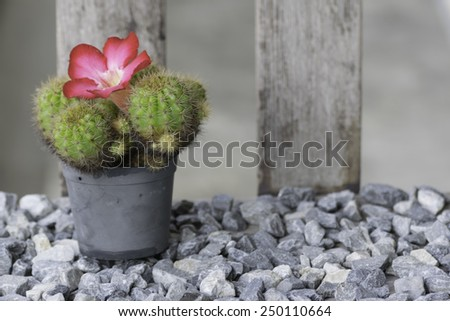 Cactuses in flowerpots with flowers - stock photo