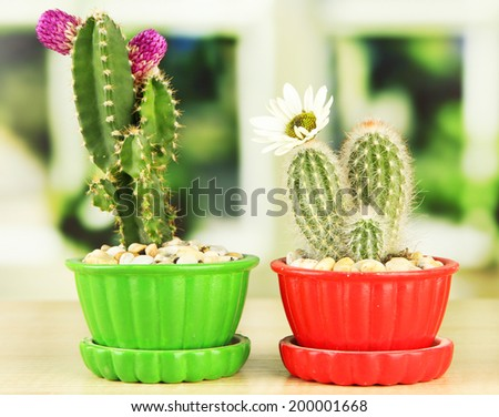 Cactuses in flowerpots with flowers, on wooden windowsill - stock photo