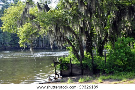 Caddo Bayou Wake And Ducks - stock photo