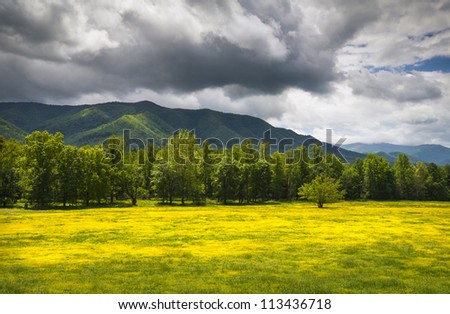 Cades Cove Spring Flowers Great Smoky Mountains National Park Fields with dramatic sky and Appalachian mountain peaks - stock photo