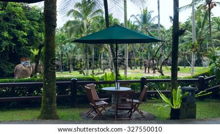 Cafe overlooking elephants - stock photo