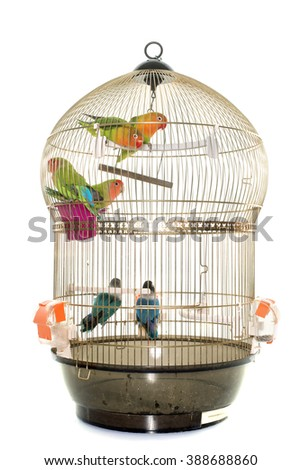 cage with lovebirds in front of white background
